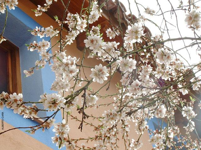 Flores Artesonado